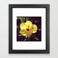 Summertime Flower Framed Art Print