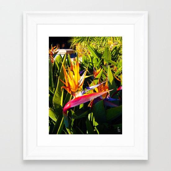 Bird of Paradise IV Framed Art Print