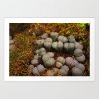 Cactus Stones Art Print