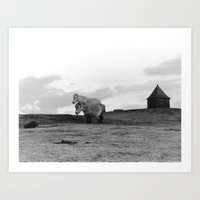 Two Dartmoor Ponies In T… Art Print
