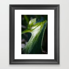 Staghorn Fern I Framed Art Print