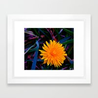 Dandelion of All Colors Framed Art Print