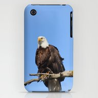 iPhone & iPod Case featuring Patiently Waiting! by Alaskan Momma Bear