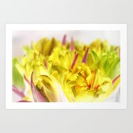 Yellow Tulips Art Print