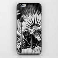 Desert Daisies (bnw) - Daisy Project in memory of Mackenzie iPhone & iPod Skin