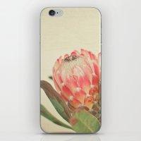 Pink Ice iPhone & iPod Skin