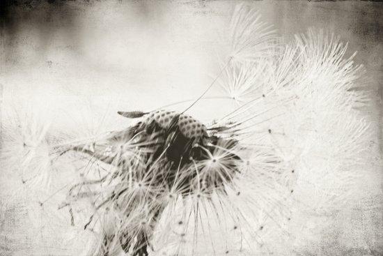 wind swept Art Print