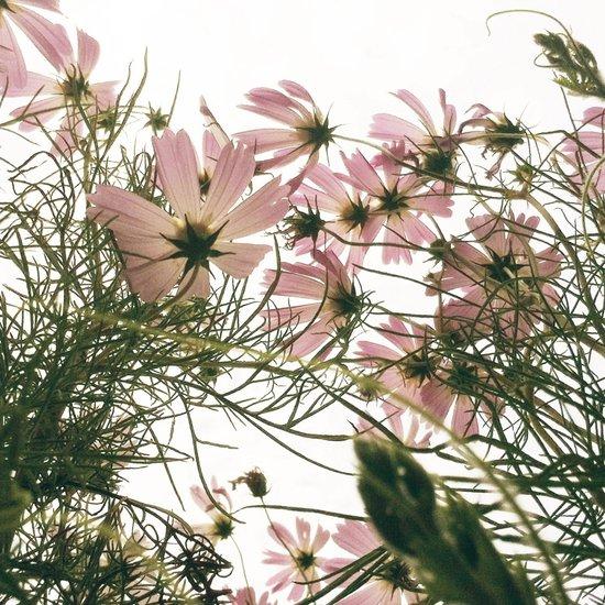FLOWER 044 Art Print