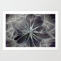 Meadow Salsify 5143 Art Print