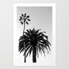 Palm Trees Windansea Art Print