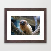 Monkey On Rope Framed Art Print