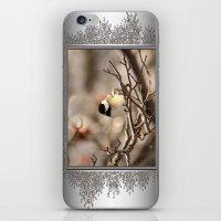Black-Capped Chickadee in Winter iPhone & iPod Skin