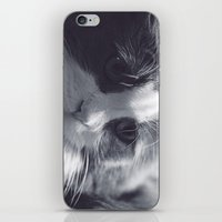 Cat Love iPhone & iPod Skin