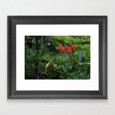 Notro flower Framed Art Print