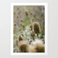 {a sea of teasels} Art Print