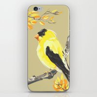 Yellow Finch iPhone & iPod Skin