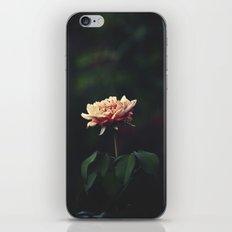 A Little Romance iPhone & iPod Skin