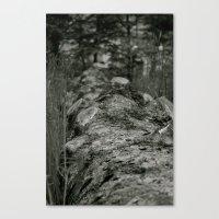 Bumpy Bark Canvas Print