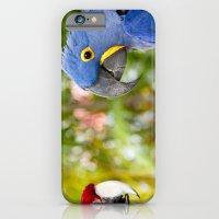 iPhone & iPod Case featuring Blue Hyacinth Macaw - Anodorhynchus hyacinthinus  by Sharon Mau