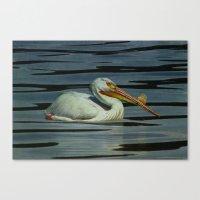 American Pelican Canvas Print