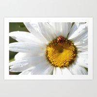 Lady Bug And Daisy Art Print