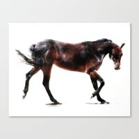 The Dancing Horse Canvas Print