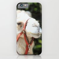 iPhone Cases featuring Ivory Camel by kealaphotography