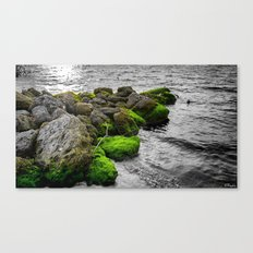 Isolated in a Monochrome Sea Canvas Print