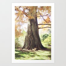 Old as the Trees Art Print