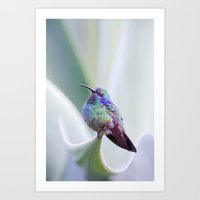 Hummingbird on Aloe Art Print