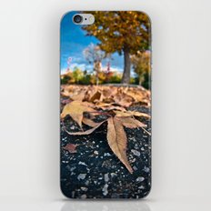 Fisheye Autumn  iPhone & iPod Skin