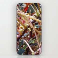 Dragon Fight    [PLANTS]   [VINES] iPhone & iPod Skin