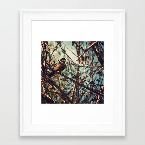 North American Robin Framed Art Print