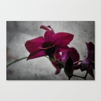 Orchid On Charcoal Canvas Print