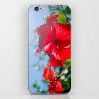 Hibiscus In Thailand iPhone & iPod Skin