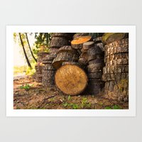 Wood pattern in the forest Art Print