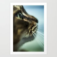 Maine Coon Close Up Art Print