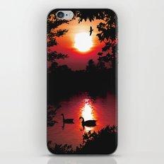 Swan Shine iPhone & iPod Skin
