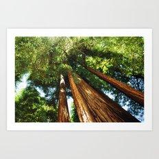Glorious Redwoods... Art Print