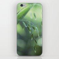 dew drop morning iPhone & iPod Skin