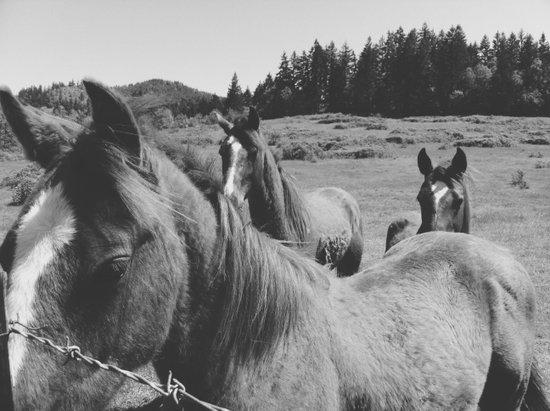 Horses Art Print