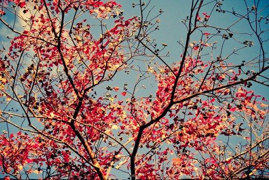 Autumn Branch & Leaves Art Print