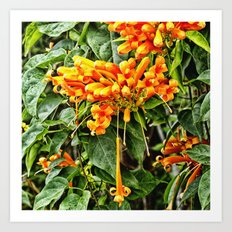 Spectacular orange trumpet flower Art Print