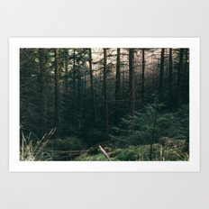 COLD PINES Art Print