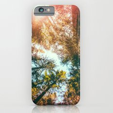 California Redwoods Sun-… iPhone 6 Slim Case