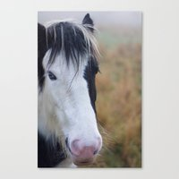 Black and White Horse Portrait Canvas Print