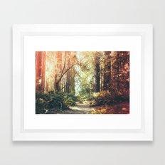 Beautiful California Redwoods Framed Art Print