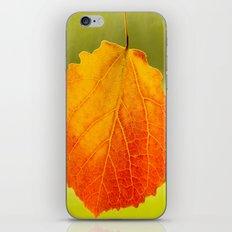 Colorful Autumn Leaf iPhone & iPod Skin