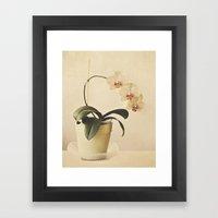 Orchids Framed Art Print