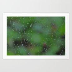 Wet Web Art Print